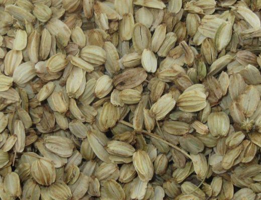 Utilizzabili come i semi del Finocchio e dell'Anice